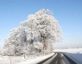 Winter beauty - nature — Stock Photo