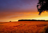 A photo of the countryside at sunset — Stock Photo