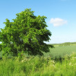 Lonely tree in the countryside — Stock Photo #6542990