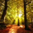 The forest in autumn - colorful — Stock Photo #6543007
