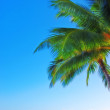 Stock Photo: Palm and blue sky