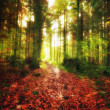 The forest in autumn - colorful - Stok fotoğraf