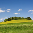 The countryside - beautiful blue sky and grass — Stock Photo