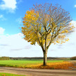 A photo of a lonely tree in the fall — Stock Photo #6543461
