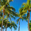 Palm and blue sky — Stock Photo