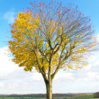 A photo of a lonely tree in the fall — Stock Photo