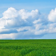 Farmland - useful as background — Stock Photo