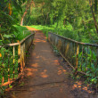 Stock Photo: Rain forest - Hawaii. HDR photo