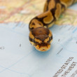 Stock Photo: Snake invasion - symbolic content