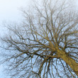 Winter tree- useful as background — Stock Photo #6543609