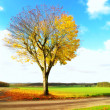 A photo of a lonely tree in the fall — Stock Photo #6543691