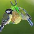 Telephoto of the Great Tit — Stock Photo