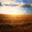 Stock Photo: Farmland - sunset, blu sky, and harvest