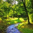 Forest and small river in early forest — Stock Photo