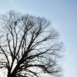 Winter tree — Stock Photo #6544164