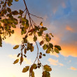 Autumn at sunset — Stock Photo