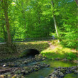 Forest and small river in early forest — Stock Photo #6544275