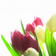 Tulip dreams - close up and light — Stock Photo