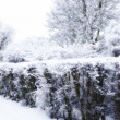 Winter landscape — Stock Photo #6544520