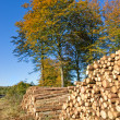 Stock Photo: Woodpile - outdoor in nature at autumn