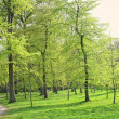 Green forest spring — Photo