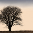 A very sharp and detailed photo of a lonely tree on a field — Stock Photo