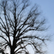 Winter tree- useful as background — Stock Photo #6545650