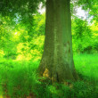 Stock Photo: Photo of Forest beauty in lush green