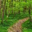 Stock Photo: Photo of Forest beauty in lush green - springtime