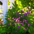 Sunset garden — Stock Photo