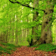 Stock Photo: :very sharp and detailed photo of famous saturated Danish forest in s