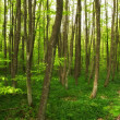 :A very sharp and detailed photo of the famous saturated Danish forest in s — Stock Photo