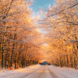 Sunset in winter — Stockfoto