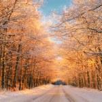 coucher de soleil en hiver — Photo
