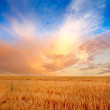 Sunset in the countryside in late summer - Stock Photo