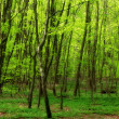 A very sharp and detailed photo of the famous saturated Danish forest in sp - Stock Photo