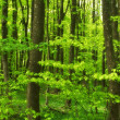A photo of Forest beauty in lush green - Stock Photo