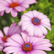 Stock Photo: Very sharp and detailed photo of Natural purple flowers closeup