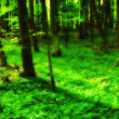 A very sharp and detailed photo of the famous saturated Danish forest in sp — Stock Photo #6546324