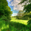 Stock Photo: Lush forest - Danish saturated forests