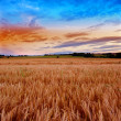 Summer sunset - before harvest — Stock Photo