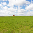 A photo of a beautiful brown horse on a green field — Stock Photo