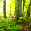 Stock Photo: Photo of wild and dark sump forest wilderness