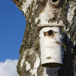 Stock Photo: Telephoto of bird house