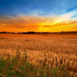 Sunset in the countryside in late summer - lots of copyspace — Stock Photo