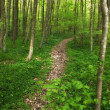 Stock Photo: Photo of green and lush forest