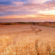 Sunset at the countryside - time for harvest — Stock Photo #6546721