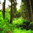 Stock Photo: Photo of lush and saturated forest