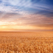 Sunset at the countryside - time for harvest — Stock Photo #6546870