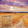 Harvest concept - sunset at the countryside - Stock Photo